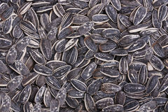 Sunflower seeds background. A background with sunflower seeds royalty free stock photo