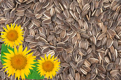 Sunflower seeds background Stock Photos