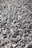 Sunflower seeds background. Stock Photo
