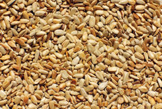 Sunflower seeds. For  background Stock Images