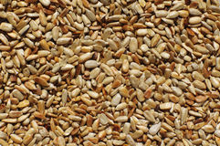 Sunflower seeds. For  background Stock Photography
