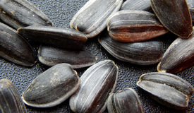 Sunflower seeds on black background Royalty Free Stock Images