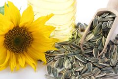 Sunflower Seeds with Blossom Stock Photo