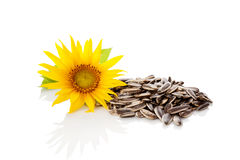 Sunflower seeds. Royalty Free Stock Images