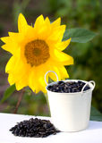 Sunflower seeds in bucket and sunflower Stock Images