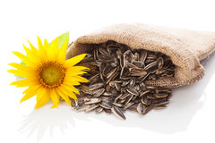 Sunflower seeds. Royalty Free Stock Photos