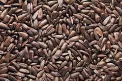 Sunflower seeds. Close up of sunflower seeds royalty free stock image