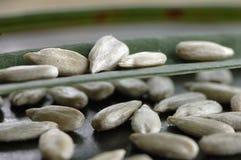 Sunflower seeds, close-up Stock Photo