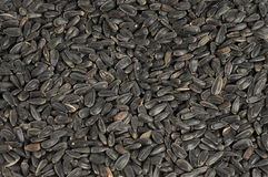 Sunflower seeds close up as background Royalty Free Stock Photos