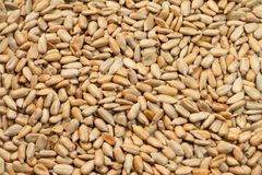 Sunflower seeds close-up as background royalty free stock images