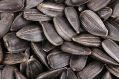 Sunflower seeds close up. Macro. Stock Image