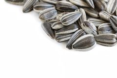 Sunflower Seeds. A close up shot of some sunflower seeds on white background Stock Photography