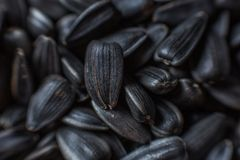 Sunflower seeds close-up. soft focus stock photography