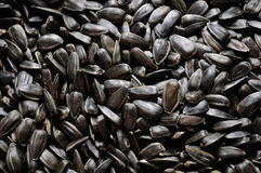 Sunflower Seeds Closeup Royalty Free Stock Images