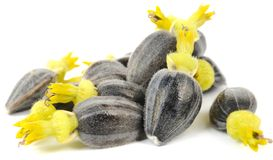 Sunflower Seeds with Corollas Royalty Free Stock Photos