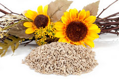 Sunflower Seeds Crop Royalty Free Stock Photography