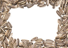 Sunflower Seeds Frame. Royalty Free Stock Image