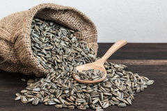 Sunflower Seeds in Gunny Bag with spoonful Stock Photo