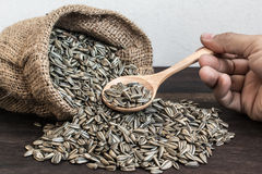 Sunflower Seeds in Gunny Bag with spoonful Stock Photos