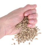 Sunflower seeds in hand Stock Image