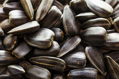 Sunflower seeds. A handful of background for texture Stock Images
