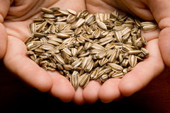 Sunflower seeds in hands Royalty Free Stock Images