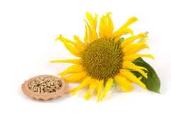 Sunflower seeds (Helianthus annuus L.) Royalty Free Stock Images
