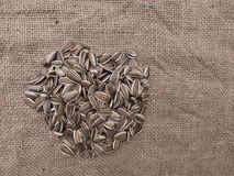 Sunflower seeds on hessian - wild bird food for winter Royalty Free Stock Image
