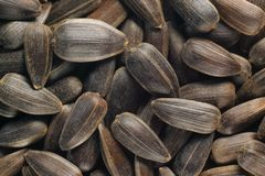 Sunflower seeds (with hull) Royalty Free Stock Photos