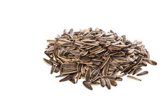 Sunflower Seeds III Stock Images