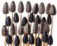 Sunflower seeds impaled on toothpicks Stock Images