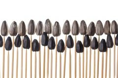 Sunflower seeds impaled on toothpicks Stock Photos