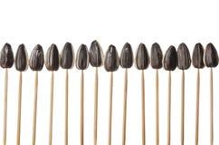 Sunflower seeds impaled on toothpicks Royalty Free Stock Image