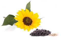 Sunflower and seeds isolated Royalty Free Stock Photo