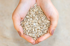 Sunflower seeds in hands Stock Photography