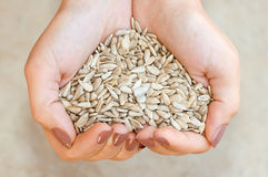 Lovely sunflower seeds Stock Photography