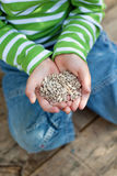 Sunflower seeds in little boys hands Royalty Free Stock Photos