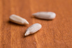 Sunflower seeds macro Stock Photography