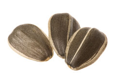 Sunflower Seeds Macro Isolated Royalty Free Stock Image