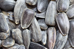 Sunflower seeds. Many sunflower seeds - filled background Stock Images