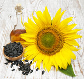 Sunflower seeds and oil Stock Images