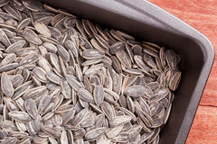 Sunflower seeds Stock Image