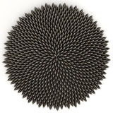 Sunflower Seeds in Perfect Golden Ratio Pattern. Sunflower seeds arranged according to golden angle by computer aided placement - accurate to 10 digits. There Royalty Free Stock Images