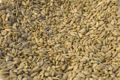 Sunflower Seeds. This is a photograph of hulled Sunflower Seeds Royalty Free Stock Photo