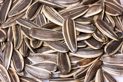 Sunflower seeds pile Royalty Free Stock Photography
