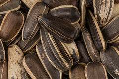 Sunflower seeds pile Royalty Free Stock Images