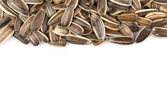 Sunflower seeds pile Royalty Free Stock Image