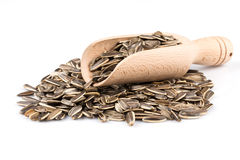 Sunflower seeds pile Stock Photo