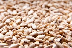 Sunflower seeds pile Stock Photography