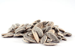 Sunflower seeds. Pile of salted sunflower seeds Royalty Free Stock Images